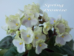 Spring Promise